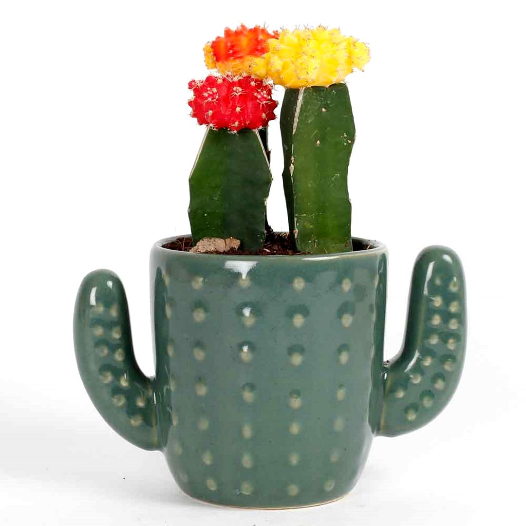 Plants for Your Office Desk